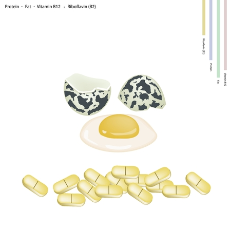 riboflavin: Healthcare Concept, Illustration of Raw Quail Eggs with Protein, Fat, Vitamin B12, Riboflavin or Vitamin B2, Essential Nutrient for Life. Illustration