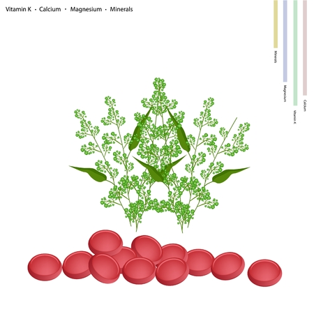Healthcare Concept, Margosa or Neem Leaves and Blossom with Vitamin K, Calcium, Magnesium and Minerals Tablet, Essential Nutrient for Life. Vektorové ilustrace