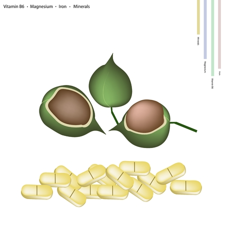 macadamia: Healthcare Concept, Macadamia Pods with Vitamin B6, Magnesium, Iron and Minerals Tablet, Essential Nutrient for Life.