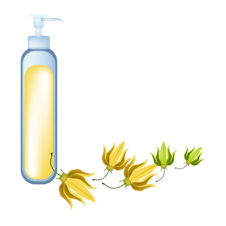 thai herb: Beautiful Flower, Illustration of Yellow Color of Ylang-Ylang Flowers with Essential Oil Isolated on A White Background