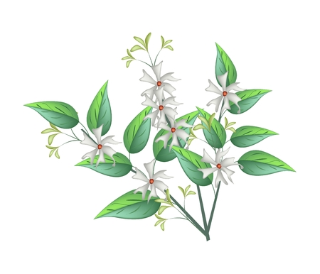flower bunch: Beautiful Flower, Bunch of White Tuberose Flowers or Night Blooming Jasmine with Green Leaves Isolated on White Background.