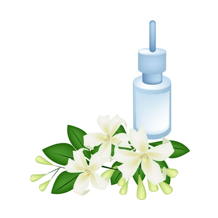 coronarius: Beautiful Flower, Illustration of Orange Jessamine or Mock Orange Flowers with Essential Oil Isolated on A White Background