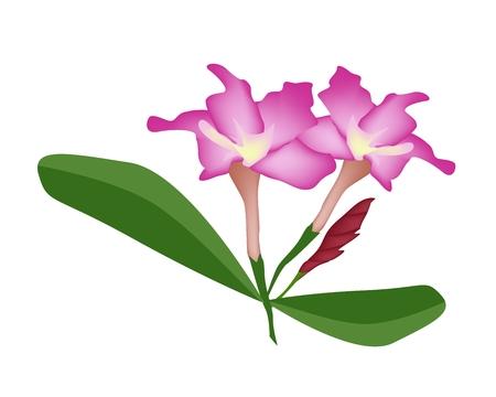 azal�e: Beautiful Flower, Illustration of Pink Desert Rose Flower or Pink Bignonia Flower with Green Leaves Isolated on White Background. Illustration