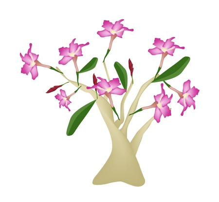 adenium: Beautiful Flower, Illustration of Pink Desert Rose or Pink Bignonia Isolated on White Background. Illustration