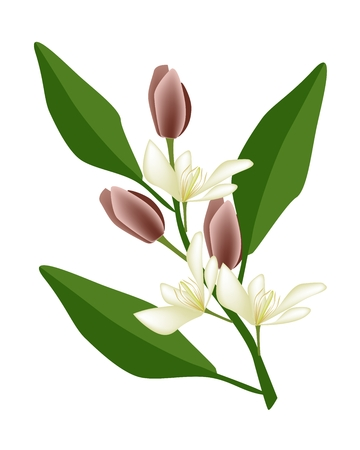 lush foliage: Beautiful Flower, Illustration of Wine Magnolia Flower or Magnolia Figo Flower with Green Leaves on A Branch. Illustration