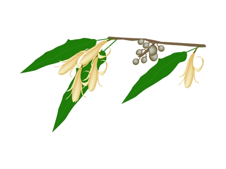 Beautiful Flower, Illustration of Yellow Michelia Alba Flower or Michelia Champaca Flower with Green Leaves and Fruits on A Branch. Illustration