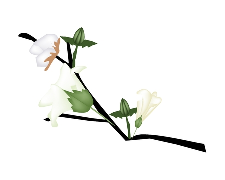 lush foliage: Beautiful Flower, Illustration of A Branch of Cotton Flower with Bud and Green Leaves Isolated on White Background. Illustration