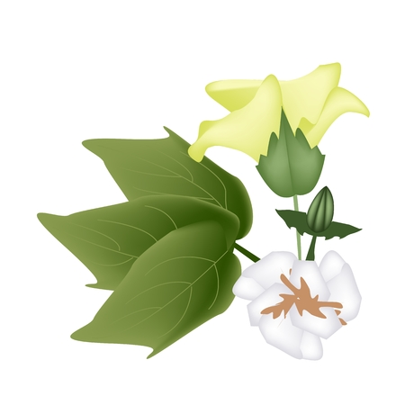 cotton flower: Beautiful Flower, Illustration of A Branch of Fresh Yellow Cotton Flower with Bud and Green Leaves Isolated on White Background.