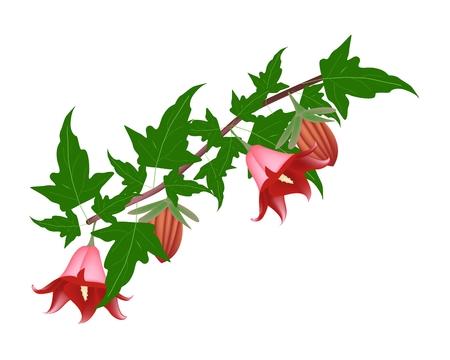 canariensis: Beautiful Flower, Illustration of Canarina Canariensis Flower or Canarian Bellflower with Green Leaves on Tree Branch.