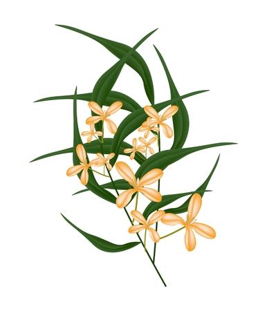 Schöne Blume, Illustration Von Cluster Of Orange Süßen Osmanthus ...