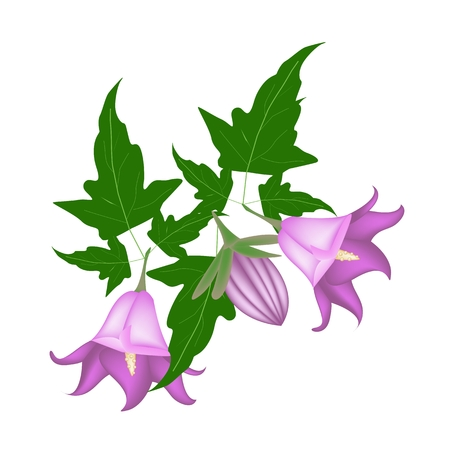 campanula: Beautiful Flower, Illustration of Campanula Rotundifolia Flower or Harebell with Green Leaves on Tree Branch.