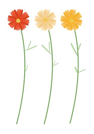 lush foliage: Symbol of Love, Bright and Beautiful Yellowe and Orange Cosmos Flowers or Cosmos Bipinnatus Isolated on White Background. Illustration