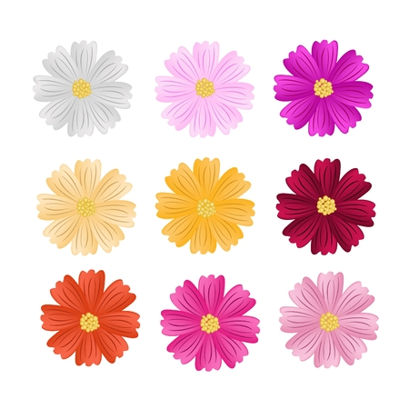 margriet: Symbol of Love, Illustration Collection of Cosmos Flowers or Cosmos Bipinnatus Isolated on White Background.