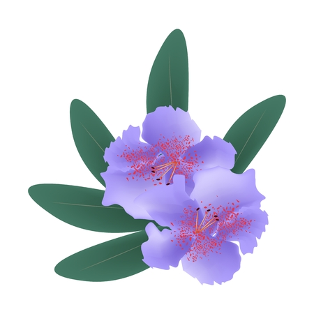 azal�e: Beautiful Flower, Illustration of Purple Rhododendron Ponticum Flowers with Green Leaves Isolated on A White Background.