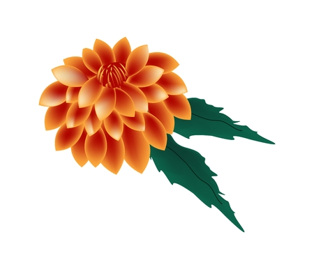 flower petal: Beautiful Flower, Illustration of Bright and Beautiful Orange Dahlia Flower with Green Leaves Isolated on White Background. Illustration