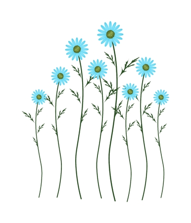 lush foliage: Symbol of Love, Bright and Light Blue Osteospermum Daisy Flowers or Cape Daisy Blossoms Isolated on White Background. Illustration