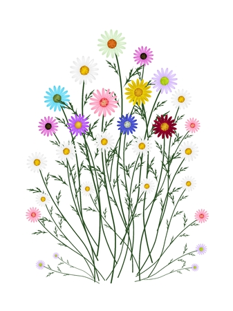 osteospermum: Symbol of Love, Bright and Assorted Osteospermum Daisy Flowers or Cape Daisy Blossoms Isolated on White Background.