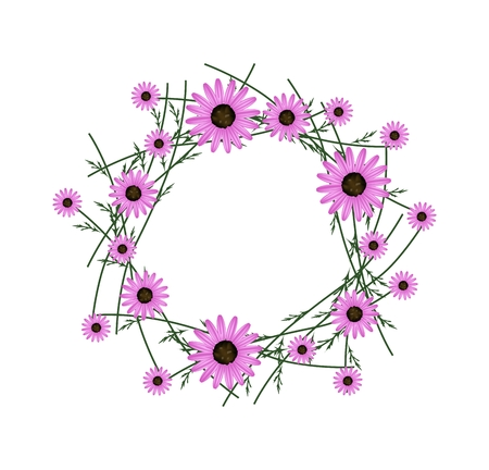 osteospermum: Symbol of Love, Illustration of Crown or Laurel Wreath of Fresh Pink Daisy Flowers Isolated on White Background.