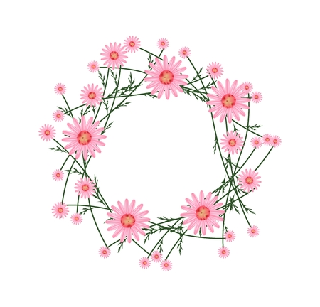 osteospermum: Symbol of Love, Illustration of Crown or Laurel Wreath of Fresh Old Rose Daisy Flowers Isolated on White Background.