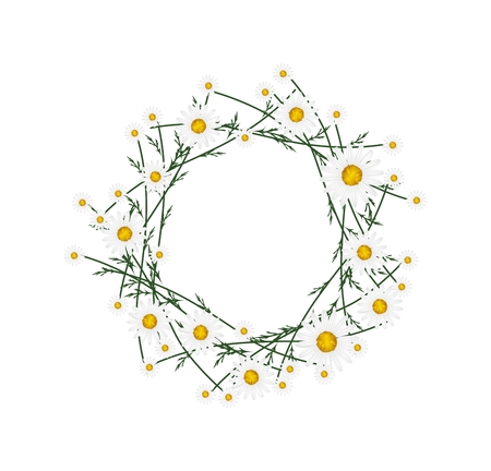 marguerite: Symbol of Love, Illustration of Crown or Laurel Wreath of Fresh White Daisy Flowers Isolated on White Background. Stock Photo