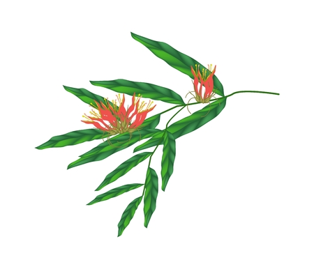 thai herb: Illustration of Red Clinacanthus nutans Flowers with Green Leaves Isolated on Transparent White Background.