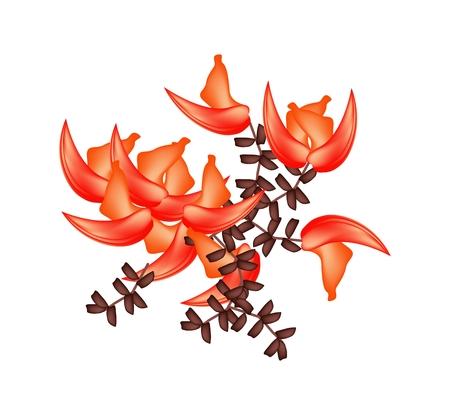 teak: Beautiful Flower, Illustration of Beautiful Bastard Teak Flowers or Butea Monosperma Flowers Isolated on Transparent Background.