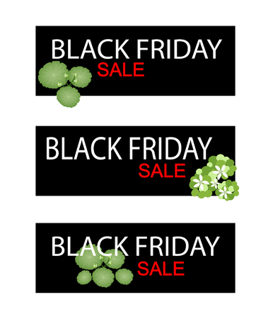 asiatic: Illustration of Asiatic Pennywort or Hydrocotyle Umbellata Plant on Black Friday Shopping Banner for Start Christmas Shopping Season. Illustration
