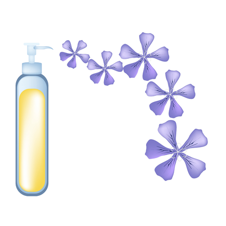essential: Beautiful Flower, Illustration of Beautiful Violet Rose Geranium Flowers or Pelargonium Graveolens Flowers with Essential Oil Isolated on White Background.