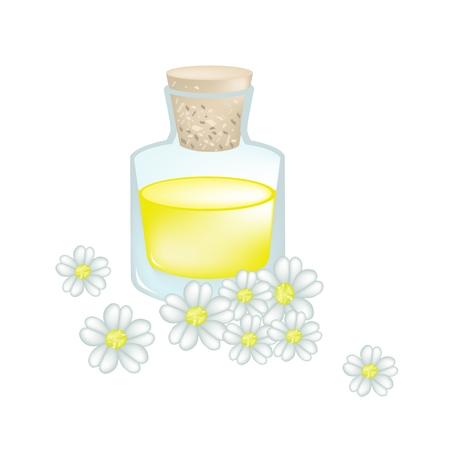 essential: Beautiful Flower, Illustration of White Yarrow Flowers with with Essential Oil Isolated on White Background.