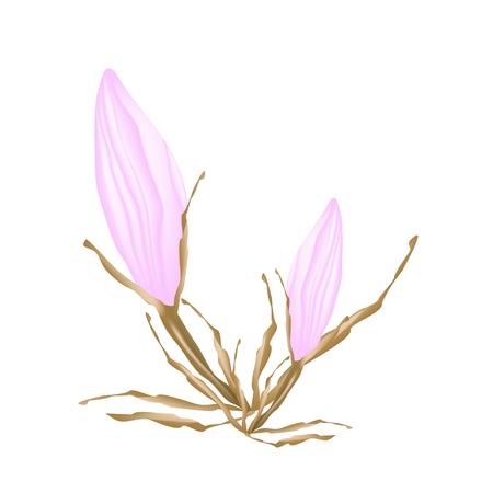 lush foliage: Beautiful Flower, Illustration of Beautiful Pink Equiphyllum Flowers Isolated on A White Background Illustration