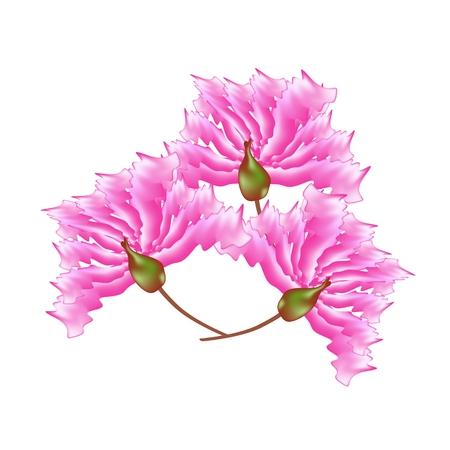 fistula: Beautiful Flower, Illustration Pink Crape Myrtle Flowers or Lagerstroemia Indica Flowers Isolated on White Background