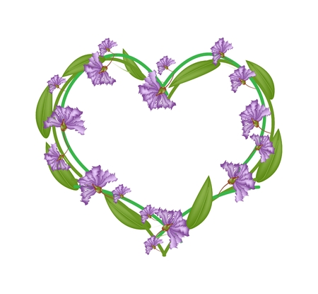 indica: Love Concept, Illustration of Purple Crape Myrtle Flowers or Lagerstroemia Indica Flowers Forming in Heart Shape Isolated on White Background. Illustration
