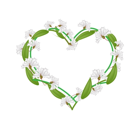 myrtle: Love Concept, Illustration of White Crape Myrtle Flowers or Lagerstroemia Indica Flowers Forming in Heart Shape Isolated on White Background.