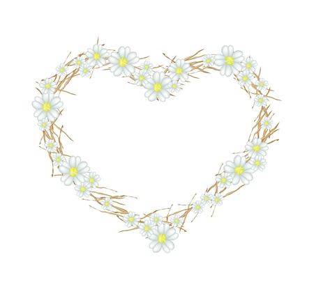asteraceae: Love Concept, Illustration of White Yarrow Flowers or Achillea Millefolium Flowers Forming in Heart Shape Frame Isolated on White Background. Stock Photo