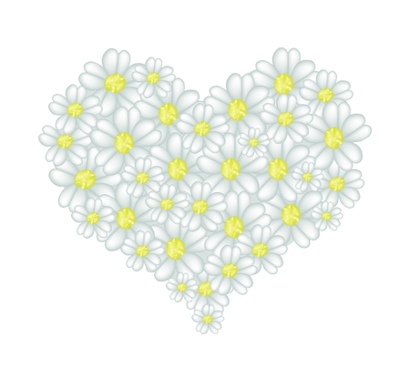 asteraceae: Love Concept, Illustration of White Yarrow Flowers or Achillea Millefolium Flowers Forming in Heart Shape Isolated on White Background.