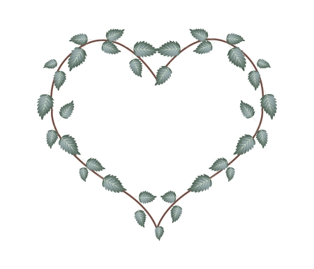 vine leaves: Love Concept, Illustration of Heart Shape Wreath Made of Fresh Green Vine Leaves Isolated on A White Background.