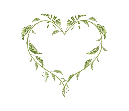 leafy: Love Concept, Illustration of Heart Shape Frame Made of Fresh Leafy Vine Leaves Isolated on White Background.