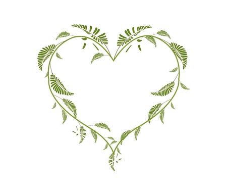 Love Concept, Illustration of Heart Shape Frame Made of Fresh Leafy Vine Leaves Isolated on White Background.