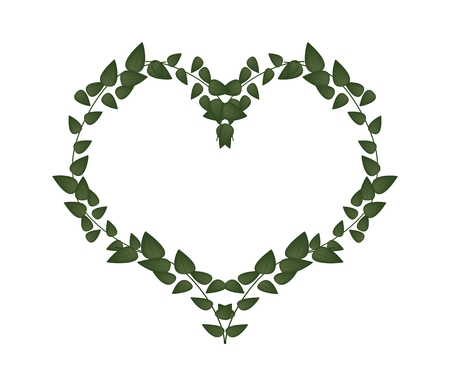 vine leaves: Love Concept, Illustration of Beautiful Heart Shape Frame Made of Fresh Green Vine Leaves Isolated on A White Background. Illustration