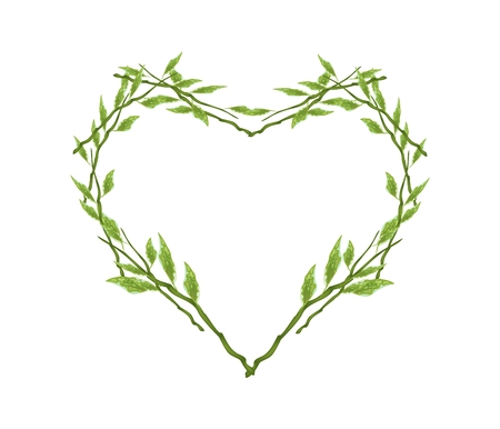 redbird: Love Concept, Illustration of Heart Shape Wreath Made of Pedilanthus Tithymaloides or Redbird Cactus Plants Isolated on A White Background.