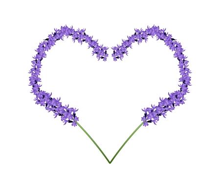 사랑 개념, 흰색 배경에 고립 된 심장 모양 프레임에 형성하는 보라색 라벤더 꽃의 그림. 일러스트