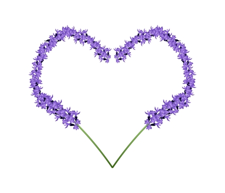 Love Concept, Illustration of Purple Lavender Flowers Forming in Heart Shape Frame Isolated on White Background. 向量圖像