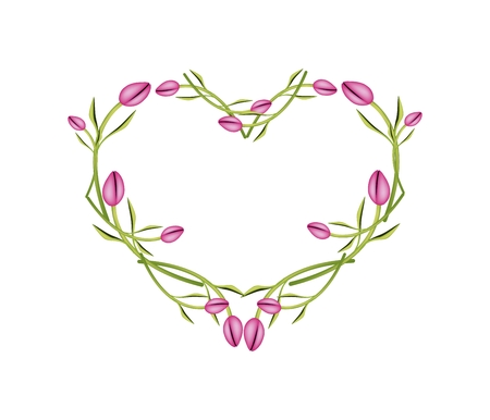 tulips isolated on white background: Love Concept, Illustration of Pink Tulips Forming in Heart Shape Isolated on White Background.