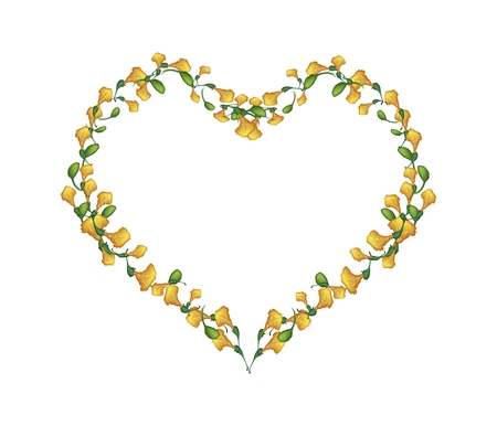 fistula: Love Concept, Illustration of Yellow Padauk Flowers or Papilionoideae Flowers Forming in Heart Shape Isolated on White Background. Illustration