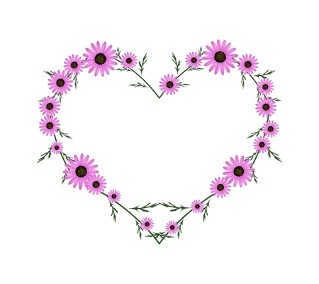osteospermum: Love Concept, Illustration of Fresh Pink Daisy Flowers Forming in Heart Shape Isolated on White Background.