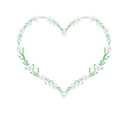 millefolium: Love Concept, Illustration of White Yarrow Flowers or Achillea Millefolium Flowers Forming in A Heart Shape Frame Isolated on White Background. Illustration