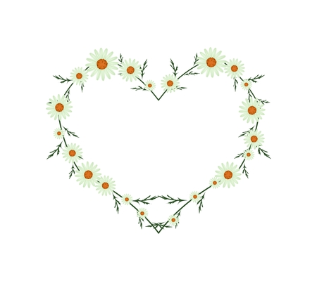 asteraceae: Love Concept, Illustration of Fresh Light Green Daisy Flowers Forming in Heart Shape Isolated on White Background. Illustration