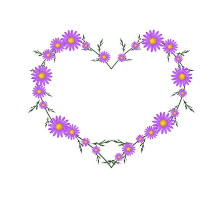 asteraceae: Love Concept, Illustration of Fresh Violet Daisy Flowers Forming in Heart Shape Isolated on White Background.