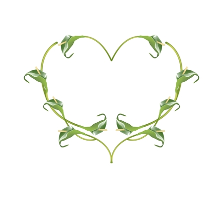 Love Concept, Illustration of Green Anthurium Flowers or Flamingo Flowers Forming in Heart Shape Isolated on White Background.