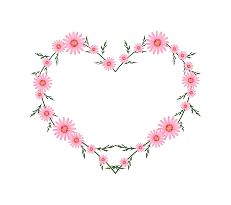 asteraceae: Love Concept, Illustration of Fresh Pink Daisy Flowers Forming in Heart Shape Isolated on White Background.